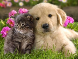 Funny cute puppies and kittens