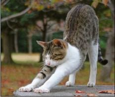 Cute Cat Stretching Jigsaw