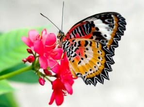 Butterfly In Flower Garden Jigsaw Puzzle
