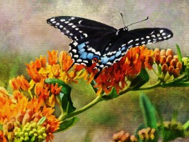 Black Butterfly On a Flower Jigsaw Puzzle