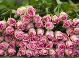 Pink Roses Switzerland