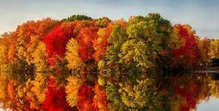 Desenhos de Autumn Reflection Jigsaw Puzzle para colorir