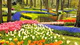 Keukenhof Garden and Tulip Field